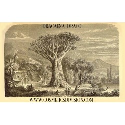 SANGUE DI DRAGO RESINA (Daemenorops Draco - Dracaena Draco) WWW.COSMETICSDIVISION.COM