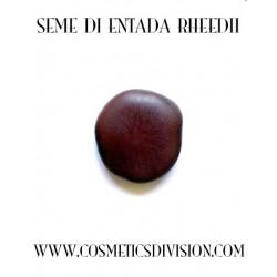 SEME DI ENTADA RHEEDII - ONEIROGENO SCIAMANICO  -  WWW.COSMETICSDIVISION.COM - ORGANIC - BIO - ONEIROGENO - SCIAMANICO