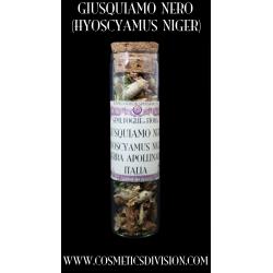 giusquiamo nero - erba apollinare - magia - wicca - erba delle streghe - morgana - merlino - WWW.COSMETICSDIVISION.COM