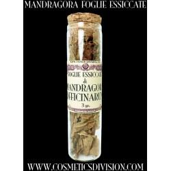MANDRAGORA OFFICINARUM - FOGLIE ESSICCATE - MAGIA - WICCA - SCIAMANESIMO - WWW.COSMETICSDIVISION.COM - ARCANA - MANDRAGOLA