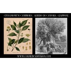 RESINA NATURALE DI CANFORA (BORNEOL CAMPHOR - DRYOBALANOPS AROMATICA) - CINNAMOMUM CAMPHORA - INCENSI NATURALI